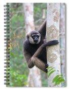 Bornean White-bearded Gibbon Spiral Notebook