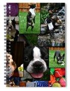 Boston Terrier Photo Collage Spiral Notebook