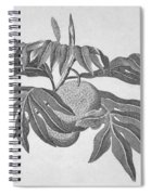 Botany: Breadfruit Tree Spiral Notebook