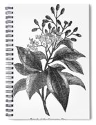 Botany: Cinnamon Tree Spiral Notebook