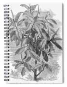 Botany: Ficus Elastica Spiral Notebook