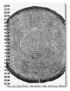 Botany:  Fir Tree Trunk Spiral Notebook