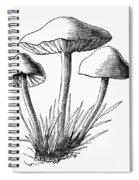 Botany: Mushroom Spiral Notebook