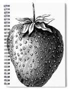 Botany: Strawberry Spiral Notebook