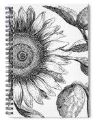 Botany: Sunflower Spiral Notebook