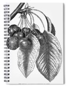 Botany: The Cherry Spiral Notebook