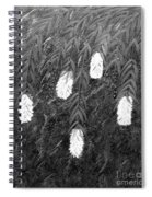 Bottlebrush Plant B W Spiral Notebook
