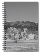 Boulder County Colorado Front Range Panorama With Horses Bw Spiral Notebook