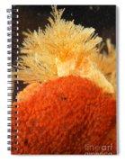 Bowerbanks Halichondria & Spiral-tufted Spiral Notebook