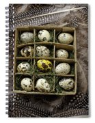 Box Of Quail Eggs Spiral Notebook