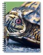 Box Turtle 1 Spiral Notebook