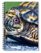 Box Turtle 2 Spiral Notebook