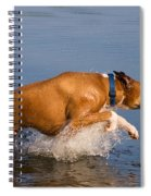 Boxer Playing In Water Spiral Notebook