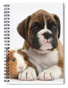 Boxer Puppy And Guinea Pig Spiral Notebook