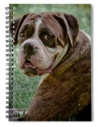 Boxer Smiles Spiral Notebook