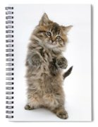 Boxing Kitten Spiral Notebook
