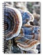 Bracket Fungi - Fungus Spiral Notebook
