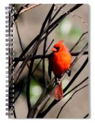 Brambles Spiral Notebook