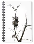 Branch Of Dried Out Flowers. Spiral Notebook