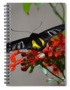 Brazilian Moth Spiral Notebook