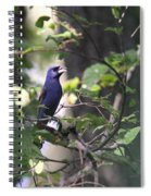 Bright Blue Spiral Notebook
