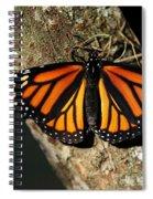 Bright Orange Monarch Butterfly Spiral Notebook