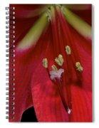 Bright Rose Amaryllis Spiral Notebook