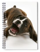 Brindle Boxer Pup Spiral Notebook