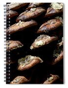 Bristle Pine Cone Spiral Notebook
