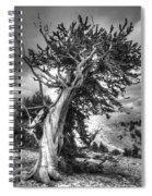 Bristlecone Patriarch  Spiral Notebook