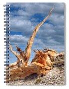 Bristlecone Pine In Repose Spiral Notebook
