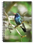 Broad-billed Hummingbird  Spiral Notebook