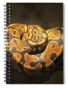 Brown And Black Snake Spiral Notebook