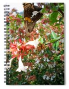 Brown And Yellow Butterfly Spiral Notebook