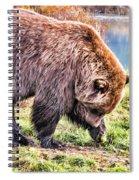 Brown Bear 201 Spiral Notebook