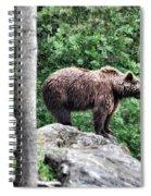 Brown Bear 208 Spiral Notebook
