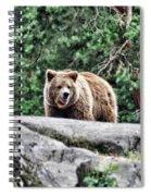 Brown Bear 209 Spiral Notebook