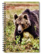 Brown Bear 210 Spiral Notebook