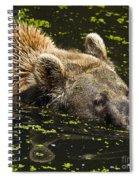 Brown Bear Swimming Spiral Notebook