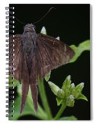 Brown Butterfly Dorantes Longtail Spiral Notebook