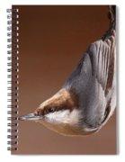 Brown-headed Nuthatch - Little Nutty Spiral Notebook