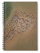 Brown Pelican Flock Spiral Notebook