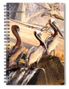 Brown Pelican - Holding Things Together Spiral Notebook