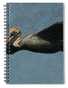 Brown Pelican Painterly Spiral Notebook