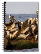 Brown Pelicans - Beauty Of Sand Island Spiral Notebook