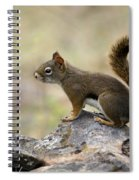 Brown Squirrel In Spokane Spiral Notebook