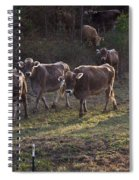 Brown Swiss Cows Coming Home Spiral Notebook
