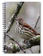 Brown Thrasher - Spot Spiral Notebook