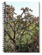 Buchorn Cholla Spiral Notebook