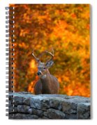 Buck In The Fall 01 Spiral Notebook